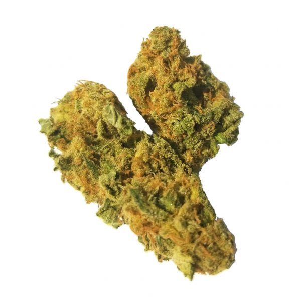 Moby Dick - The Healing Comedical cannabis medical marijuana products