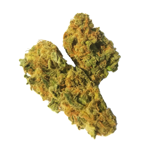Moby Dick by The Healing Co