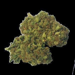 Dutch Haze by The Healing Co