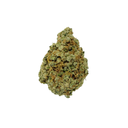 Jack Herer – Sativa – The Healing Co