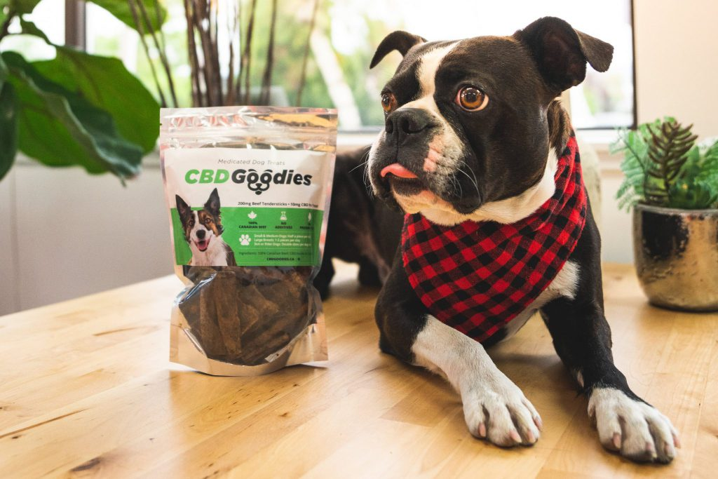Read more on CBD for Pets