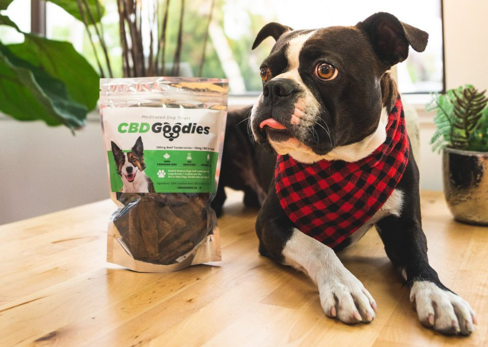 Online Dispensary Canada The Healing Co - CBD For Pets