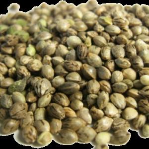 Mota Premium Select Seeds - THC