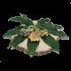 Golden Teacher Psilocybin Mushrooms - The Healing Co